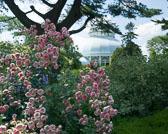 NY-botanical-garden-6121.jpg